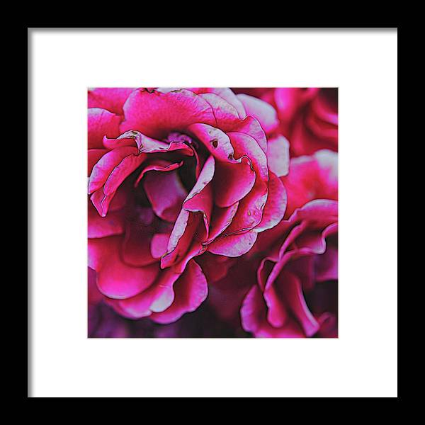 Pink and White Flowers - Framed Print