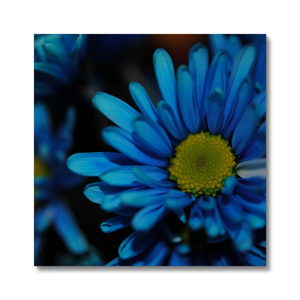 Blue Daisy Canvas