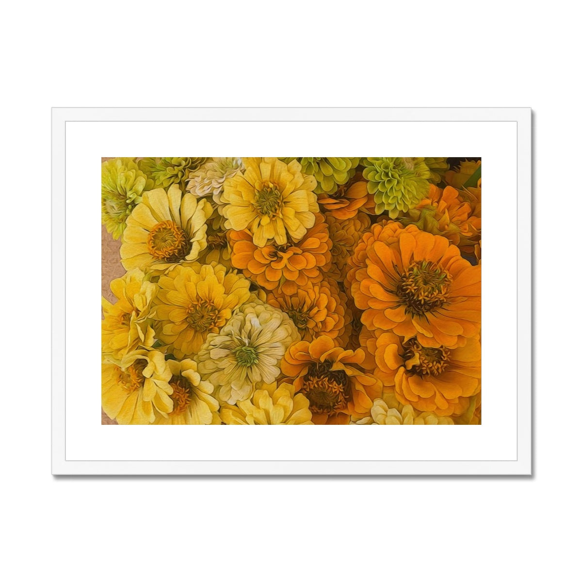 Yellow Zinnias Framed & Mounted Print