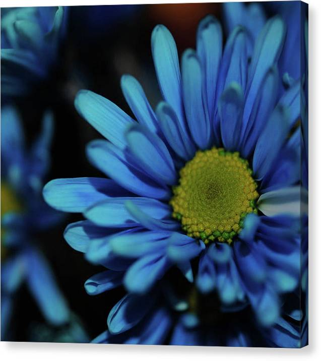 Blue Daisy - Canvas Print