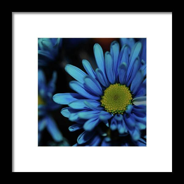 Blue Daisy - Framed Print