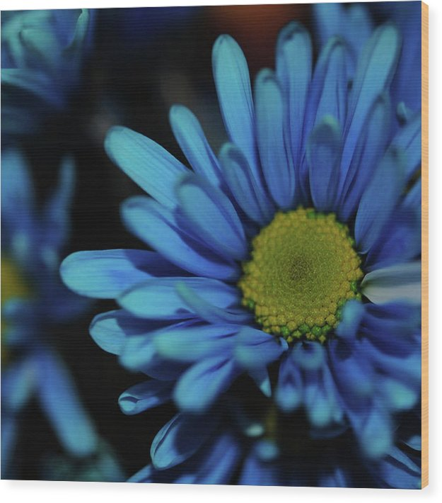 Blue Daisy - Wood Print