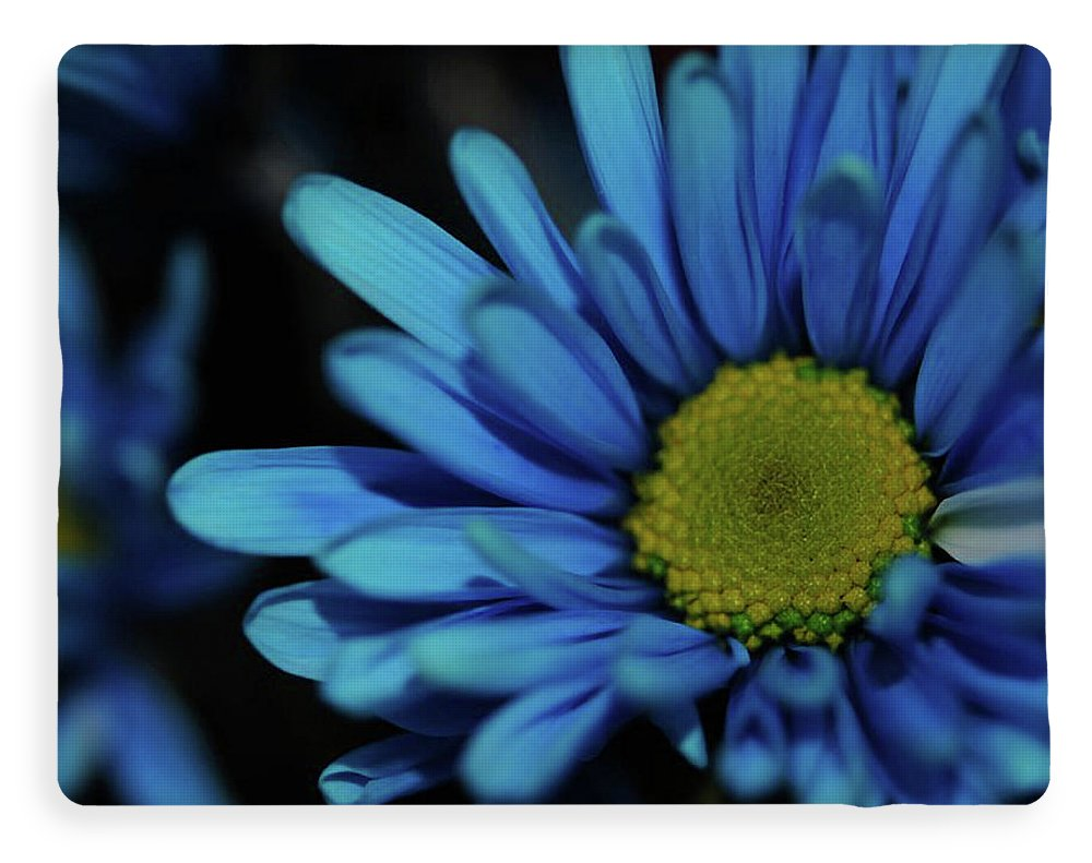 Blue Daisy - Blanket