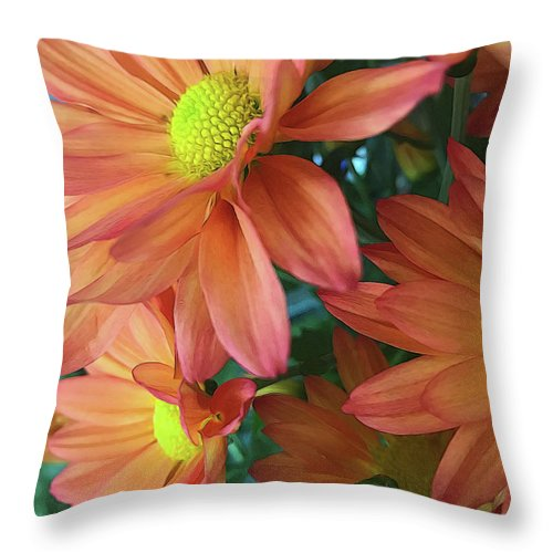 Cream and Pink Daisies Close Up - Throw Pillow