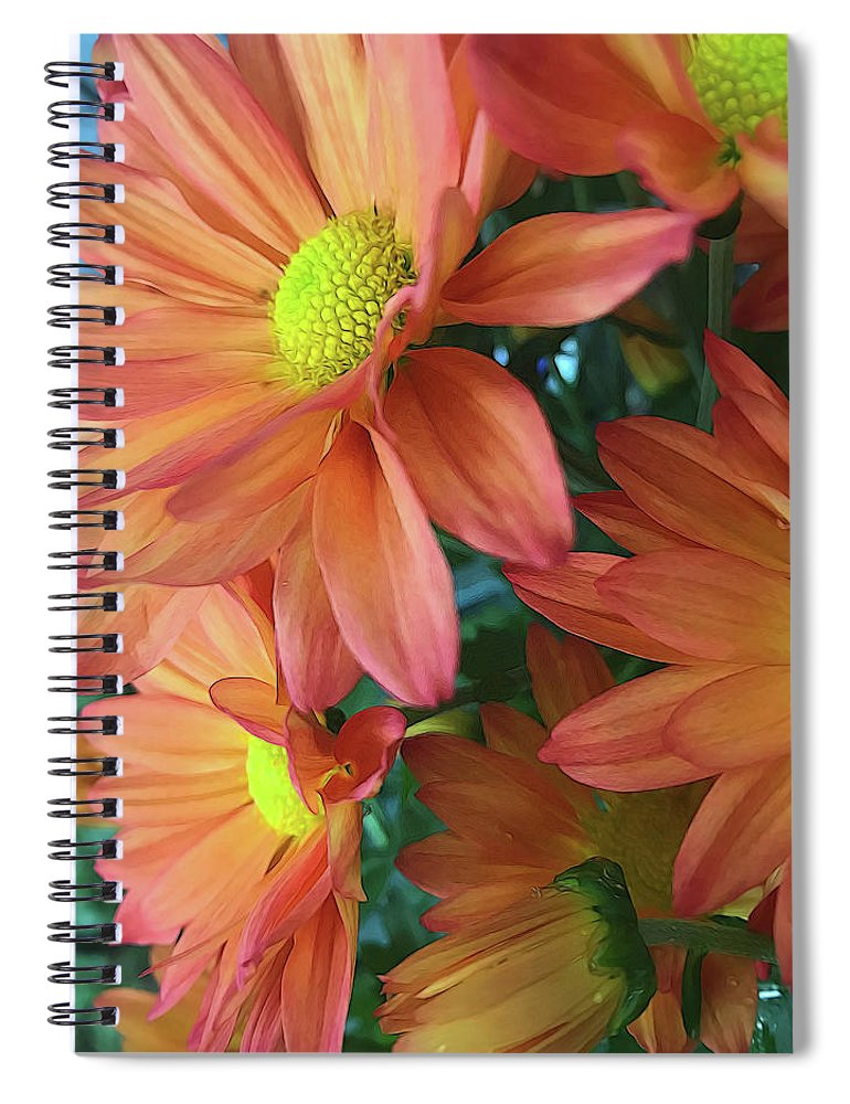 Cream and Pink Daisies Close Up - Spiral Notebook