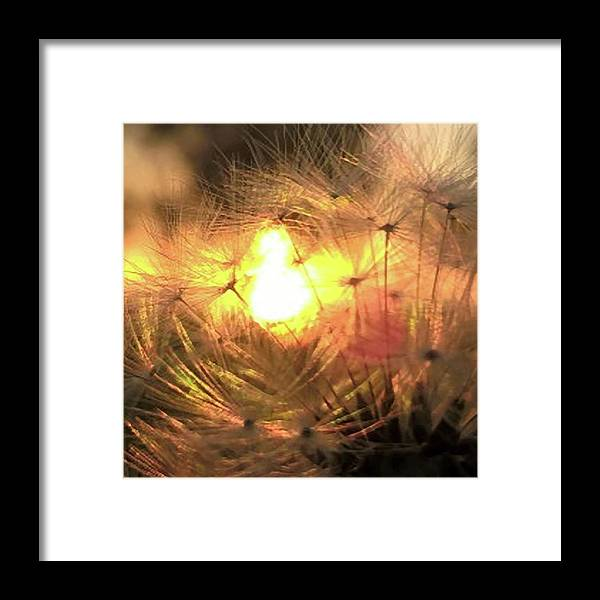 Dandelion Sunrise Wish - Framed Print