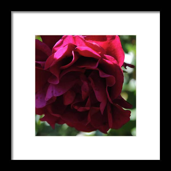 Dark Pink Flower - Framed Print