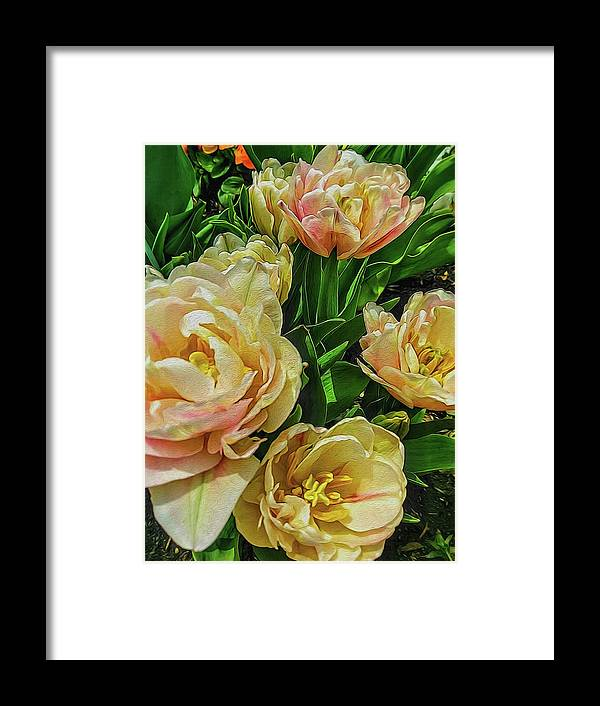 Early Summer Flowers - Framed Print