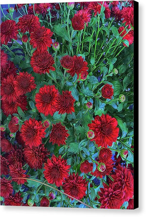 Red Mums - Canvas Print