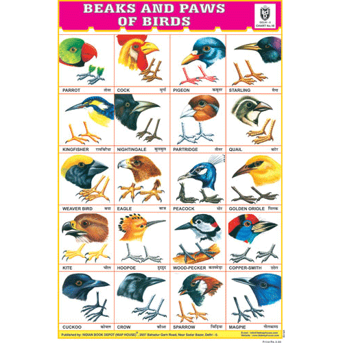 BEAKS & PAWS OF BIRDS SIZE 24 X 36 CMS CHART NO. 10 - Indian Book Depot (Map House)