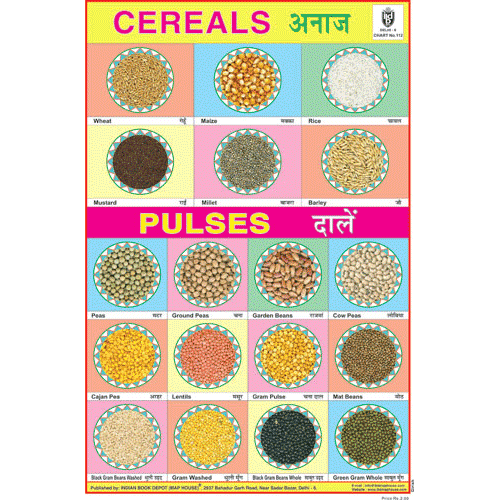 CEREALS & PULSES CHART SIZE 12X18 (INCHS) 300GSM ARTCARD - Indian Book Depot (Map House)