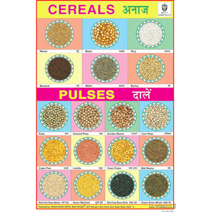 CEREALS & PULSES SIZE 24 X 36 CMS CHART NO. 112 - Indian Book Depot (Map House)