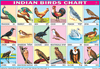 BIRDS CHART 18 PHOTOS CHART SIZE 12X18 (INCHS) 300GSM ARTCARD - Indian Book Depot (Map House)