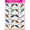 WINGS OF BIRDS CHART SIZE 12X18 (INCHS) 300GSM ARTCARD