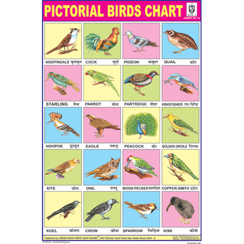 BIRDS CHART 20 PHOTOS SIZE 24 X 36 CMS CHART NO. 12 - Indian Book Depot (Map House)