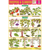 CREEPERS & CLIMBERS CHART SIZE 12X18 (INCHS) 300GSM ARTCARD - Indian Book Depot (Map House)