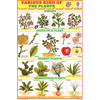 HERBS & SHRUBS CHART SIZE 12X18 (INCHS) 300GSM ARTCARD - Indian Book Depot (Map House)