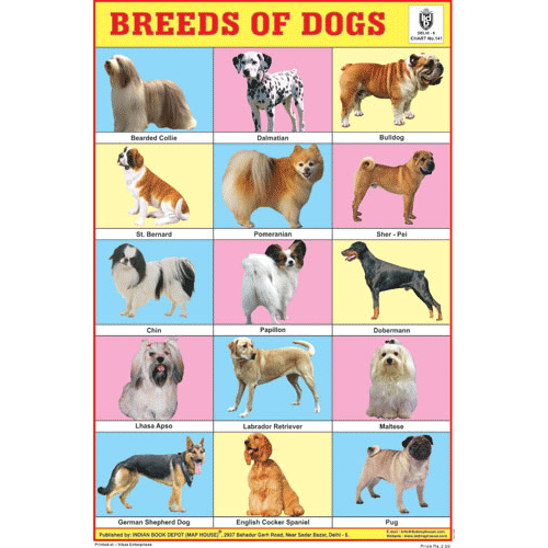 BREEDS OF DOGS SIZE 24 X 36 CMS CHART NO. 141 - Indian Book Depot (Map House)