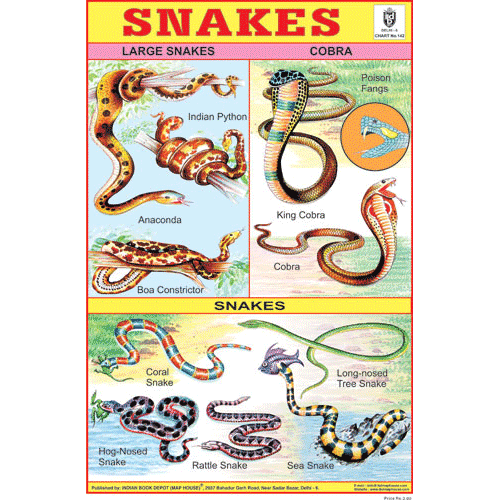 SNAKES SIZE 24 X 36 CMS CHART NO. 142 - Indian Book Depot (Map House)