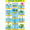 WATER PLANTS SIZE 24 X 36 CMS CHART NO. 144 - Indian Book Depot (Map House)