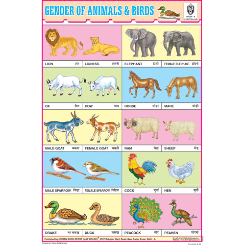 GENDER OF ANIMALS & BIRDS SIZE 24 X 36 CMS CHART NO. 148 - Indian Book Depot (Map House)