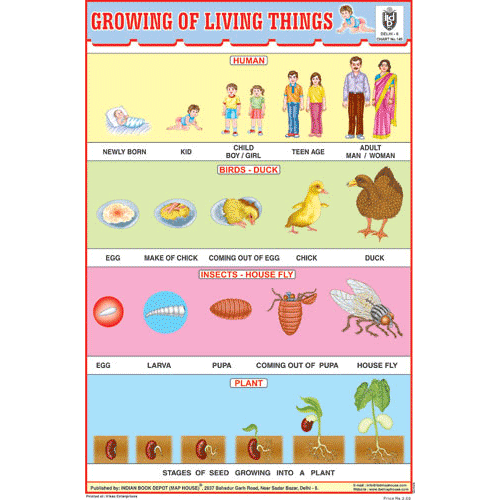 GROWING OF LIVING THINGS SIZE 24 X 36 CMS CHART NO. 149 - Indian Book Depot (Map House)