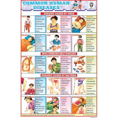 COMMAN HUMAN DISEASES SIZE 24 X 36 CMS CHART NO. 154 - Indian Book Depot (Map House)