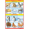 POLAR ANIMALS CHART SIZE 12X18 (INCHS) 300GSM ARTCARD - Indian Book Depot (Map House)
