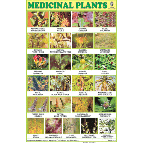 MEDICINAL PLANTS CHART SIZE 12X18 (INCHS) 300GSM ARTCARD - Indian Book Depot (Map House)