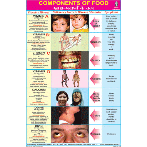 COMPONENTS OF FOOD CHART SIZE 12X18 (INCHS) 300GSM ARTCARD - Indian Book Depot (Map House)
