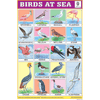 BIRDS AT SEA CHART SIZE 12X18 (INCHS) 300GSM ARTCARD - Indian Book Depot (Map House)