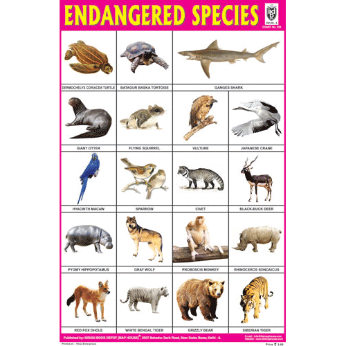 ENDANGERED SPECIES SIZE 24 X 36 CMS CHART NO. 238 - Indian Book Depot (Map House)