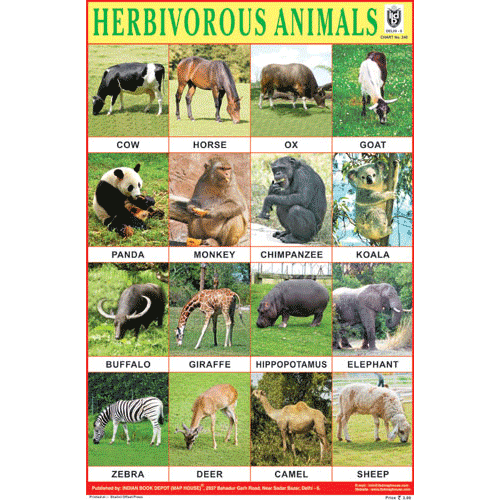 HERBIVOROUS ANIMALS SIZE 24 X 36 CMS CHART NO. 240 - Indian Book Depot (Map House)