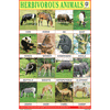 HERBIVOROUS ANIMALS CHART SIZE 12X18 (INCHS) 300GSM ARTCARD - Indian Book Depot (Map House)