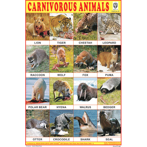 CARNIVOROUS ANIMALS CHART SIZE 12X18 (INCHS) 300GSM ARTCARD - Indian Book Depot (Map House)