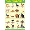 OMNIVOROUS ANIMALS SIZE 24 X 36 CMS CHART NO. 242 - Indian Book Depot (Map House)