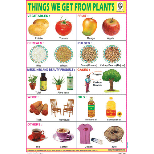 THINGS WE GET FROM PLANTS SIZE 24 X 36 CMS CHART NO. 261 - Indian Book Depot (Map House)