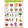 THINGS WE GET FROM PLANTS CHART SIZE 12X18 (INCHS) 300GSM ARTCARD - Indian Book Depot (Map House)