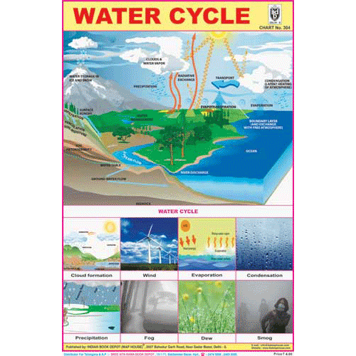 WATER CYCLE CHART SIZE 12X18 (INCHS) 300GSM ARTCARD - Indian Book Depot (Map House)