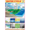 WATER CYCLE SIZE 24 X 36 CMS CHART NO. 304 - Indian Book Depot (Map House)