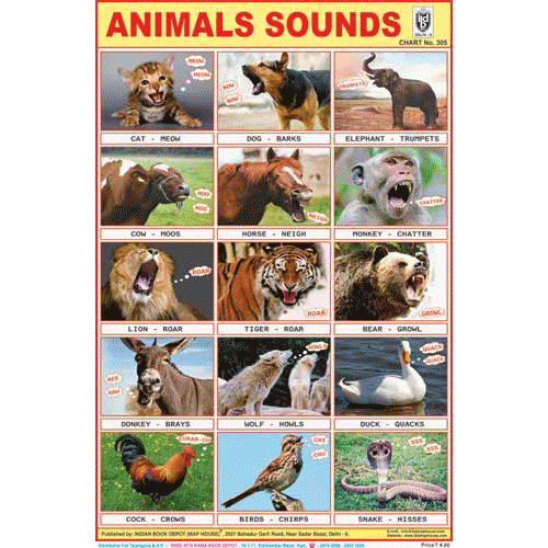 ANIMALS SOUNDS CHART SIZE 12X18 (INCHS) 300GSM ARTCARD - Indian Book Depot (Map House)