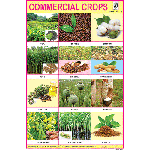 COMMERCIAL CROPS CHART SIZE 12X18 (INCHS) 300GSM ARTCARD - Indian Book Depot (Map House)