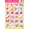 FLOWERS CHART 24 PHOTO (RED) CHART SIZE 12X18 (INCHS) 300GSM ARTCARD - Indian Book Depot (Map House)