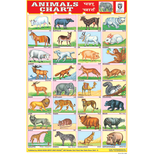 ANIMALS CHART 32 PHOTOS CHART SIZE 12X18 (INCHS) 300GSM ARTCARD - Indian Book Depot (Map House)