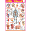 HUMAN PHYSIOLOGY SIZE 24 X 36 CMS CHART NO. 47 - Indian Book Depot (Map House)