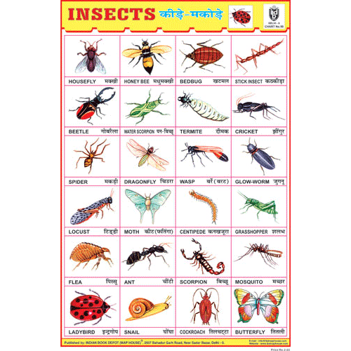 INSECTS CHART SIZE 24 X 36 CMS CHART NO. 50 - Indian Book Depot (Map House)
