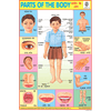 PARTS OF THE BODY SIZE 24 X 36 CMS CHART NO. 74 - Indian Book Depot (Map House)