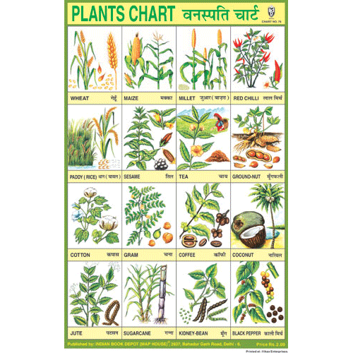 PLANTS CHART SIZE 24 X 36 CMS CHART NO. 76 - Indian Book Depot (Map House)