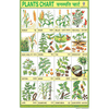 PLANTS CHART CHART SIZE 12X18 (INCHS) 300GSM ARTCARD - Indian Book Depot (Map House)
