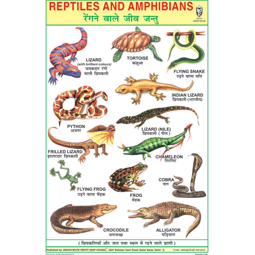 REPTILES SIZE 24 X 36 CMS CHART NO. 82 - Indian Book Depot (Map House)